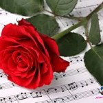 Rose with music